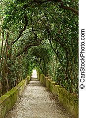 Boboli gardens - green tree alley in Boboli gardens,...