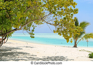 Green tree and palm on white sand beach. Maldives island.
