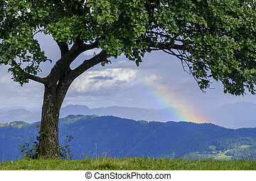 Green tree and rainbow on the top of the hill.