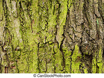 Green tree bark