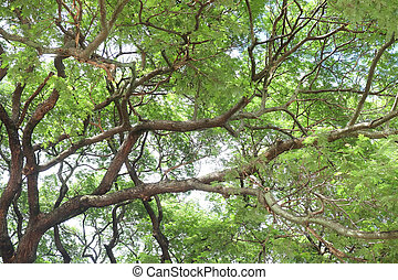 green tree branch background texture