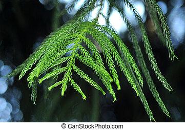 Green tree branch in spring