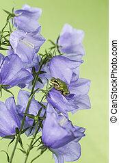 Green Tree Frog on Flowers - Pacific Tree Frog on purple...