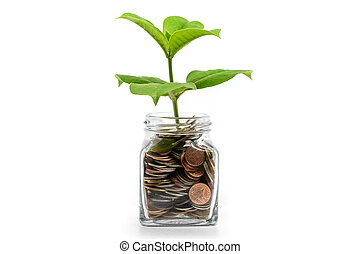 Green tree growing from coins in the glass jar on white background