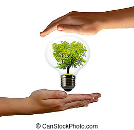 green tree growing in a bulb in the hands isolated on white