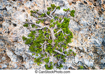 Green tree growing on the rock