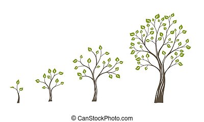 Green tree growth eco concept. Tree life cycle