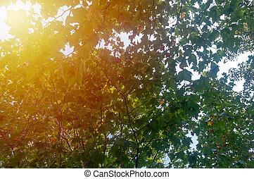 Green tree in the Sun