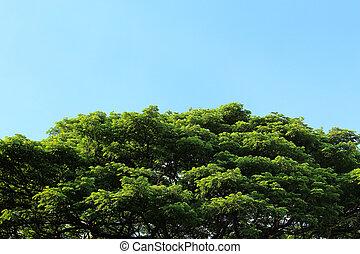 Green tree in tropical garden