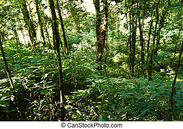 Green Tree in tropical jungle rain forest