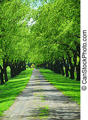Green tree lane - Lane of bright green summer trees moving ...