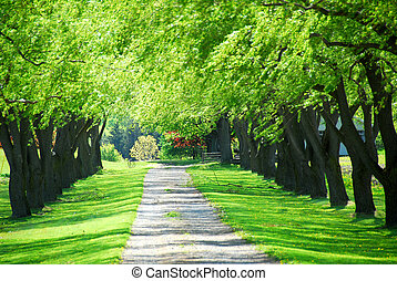 Green tree lane - Lane of bright green summer trees moving ...