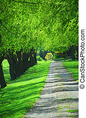 Green tree lane - Lane of bright green summer trees moving...