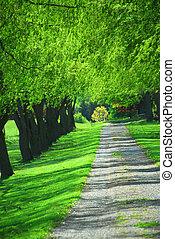 Green tree lane - Lane of bright green summer trees moving...