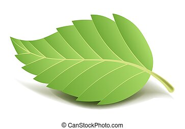 Green tree leaf on small stem with ribbed edge and thin...