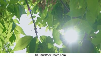 Green tree leaves canopy with hole in the center and...