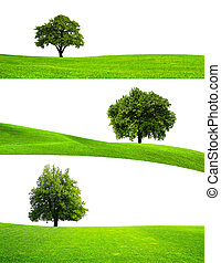 Green tree nature