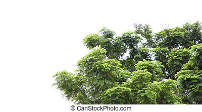 Green tree on a white background.