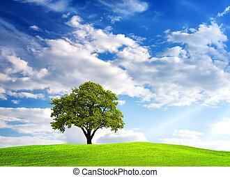 Green tree on cloudy sky