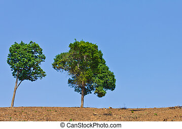 green tree on dried ground