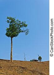 green tree on dried ground