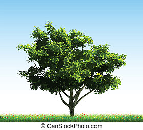 Green tree on grass. Vector