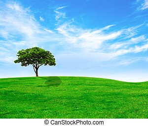 Green tree on green grass and cloudy sky