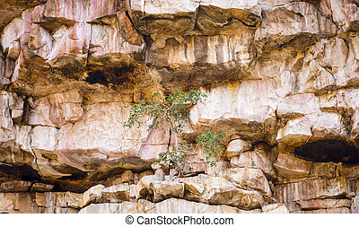 Green Tree on Rocky Cliff