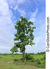 Green tree on sky background.