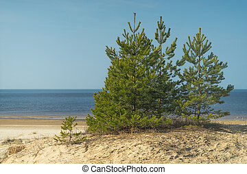 Green tree on the beach in spring