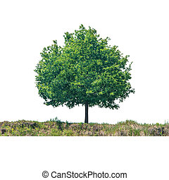 Green tree on the land