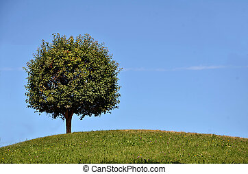 Green tree on the top of the hill