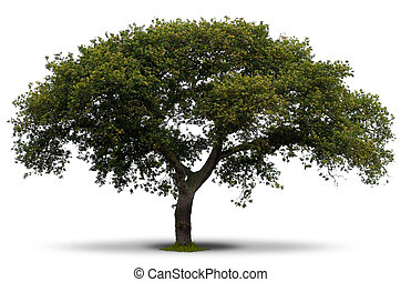 green tree over white background with grass at the root and...