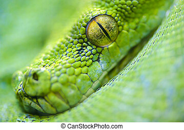 Animals: extreme close-up portrait of green tree python, selective focus, shallow depth of field