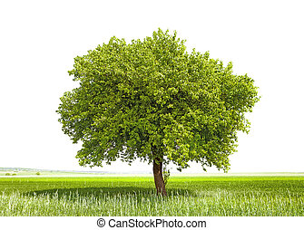 Green tree - symbol of a Green Planet Earth
