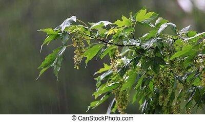 Green tree under rain