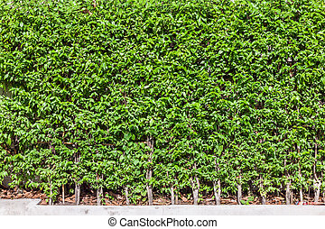 Green tree wall fence background