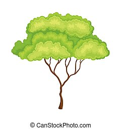 Green Tree with Brown Trunk and Leafy Crown as Forest Element Vector Illustration