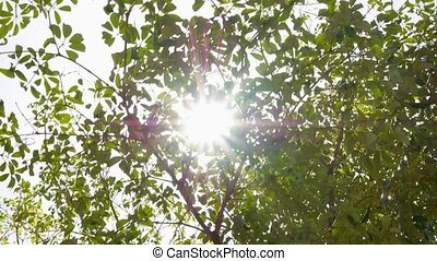 Green Tree with Sunlight. Slow Motion.