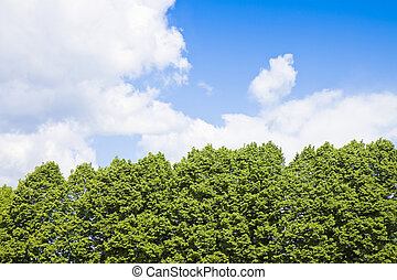 Green trees against a cloudy sky