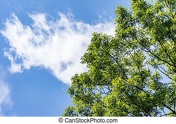 green trees against the cloudy blue sky