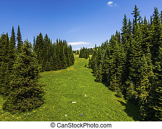 Green trees alley on the green meadows