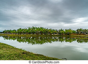 Green trees and lake
