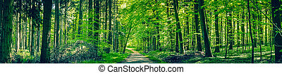 Green trees by a forest path