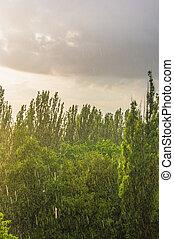 green trees in a rain
