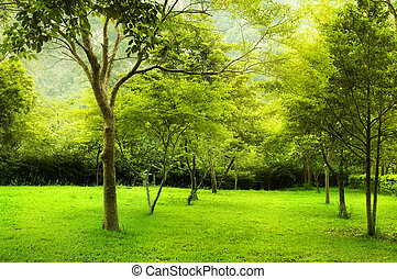 Green trees in park, a morning view.