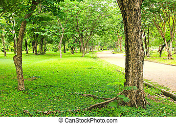 Green trees in park