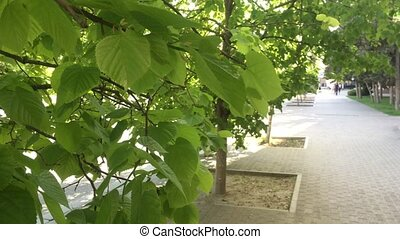 green trees in the city footpath. the wind pumps green...