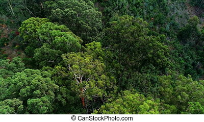 Green trees in the dense forest 4k - Aerial of green trees...