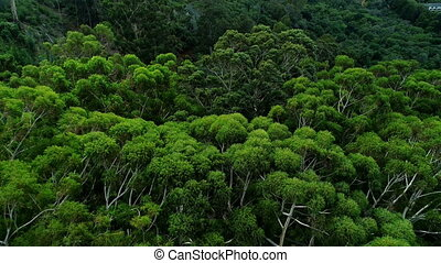 Green trees in the forest 4k - Dense green trees in the...
